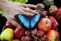 Снимки, ради которых парню из Англии пришлось подружиться с бабочками