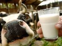 Выстрел в молоко