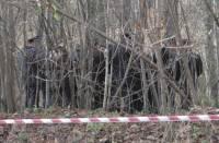Правоохранители решили закрыть «дело караванского стрелка»