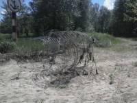Благодаря неравнодушным киевлянам проволоку на берегу Днепра уберут