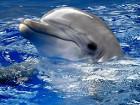 Девочку, пострадавшую в результате обрушения балкона в крымском санатории, будут лечить дельфины