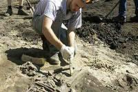Останки самого древнего примата обнаружены в Китае. Теперь Азия будет считаться родиной предков людей и обезьян