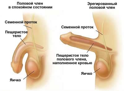 половой акт википедия фото