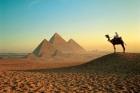 В Египте после переворота началась «охота» на «Братьев-мусульман»