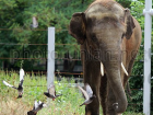 В киевском зоопарке слон заболел болезнью, от которой умер его предшественник