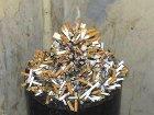 Оказывается, сигареты гораздо токсичнее, чем об этом принято судить