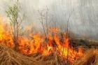 Шесть тысяч человек эвакуированы в Калифорнии из-за лесных пожаров