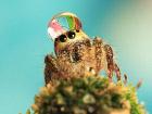 Кто сказал, что пауки страшные? В этих шапочках из воды они смотрятся очень даже мило