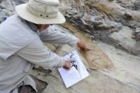 Мексиканские палеонтологи обнаружили хвост гигантского динозавра