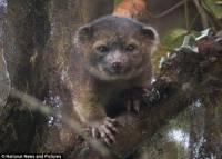 В Эквадоре обнаружено неизвестное млекопитающее. Зверушка симпатичная, но хищная