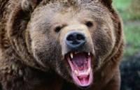 На Прикарпатье рядовой грибник едва не пал от лап кровожадного медведя
