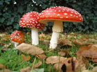 Из-за богатого урожая грибов ожидается не менее богатый урожай пациентов в больницах