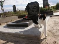 Жена поставила Мазурку памятник, а правоохранители записали на его счет еще пару-тройку убийств