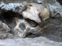 В Грузии нашли череп древнего человека, который может разрушить всю теорию развития наших предков