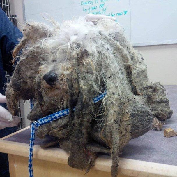 Лохматое чудовище из канадского леса