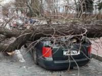 В Киеве рухнувшее на дорогу дерево знатно помяло две машины