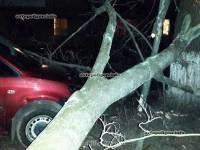 В Киеве продолжают валиться деревья, придавливая припаркованные машины
