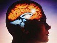 Ученые доказали, что у мужчин и женщин по-разному устроены мозги