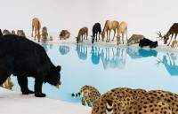 Животные со всего мира на одном водопое. Оказывается, бывает и такое
