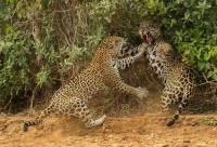 Одни из лучших снимков дикой природы 2013 года
