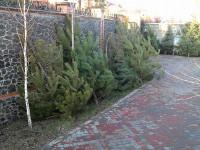 Участники Автомайдана прорвались к дому Пшонки через КамАЗы и увидели во дворе 12 елок неизвестного происхождения