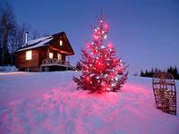 На Полтавщине безработный обокрал новогоднюю елку
