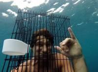 Австралиец рискнул прыгнуть к акуле с птичьей клеткой на голове. Акула смелость не оценила