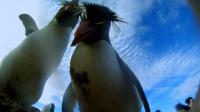 «Улыбаемся и машем». Эти пингвины совсем не с Мадагаскара, но они умеют делать и то, и другое