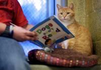 Доброты много не бывает. В США дети читают сказки... бездомным котам