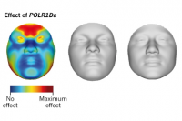 Ученые научились составлять фоторобот человека на основании особенностей его ДНК