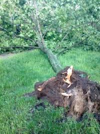 Последствия ночного урагана в Киеве: деревья повалены, провода оборваны. Свежие фото