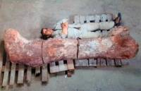 В Аргентине обнаружили останки самого большого динозавра в мире