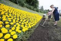 В Киеве из цветов высадили 60-метровый флаг Украины