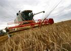 В Крыму довольны урожаем зерновых... Но продавать товар некому