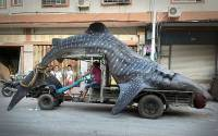 Китайский рыбак умудрился поймать акулу длиной… 4,5 метра