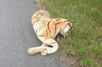 Американка до такой степени испугалась плюшевого тигра, что вызвала полицию