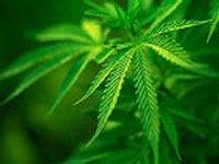 Ученые доказали, что длительное употребление марихуаны таки серьезно влияет на мозг