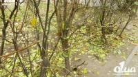 Из-за теплой погоды в Одессе началась зеленая аномалия