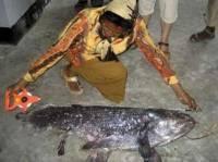 Индонезийский рыбак умудрился поймать... ископаемую рыбу
