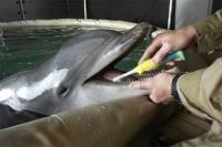 Оккупационные войска проводят в Крыму учения с украинскими боевыми дельфинами