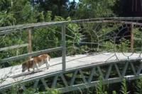 В США неизвестные умудрились украсть... мост весом 2,5 тонны