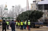 В Киеве впервые в истории воздвигли живую новогоднюю елку