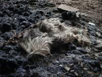 Собачий концлагерь под Киевом расформируют от греха подальше