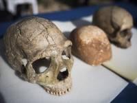 Израильтяне показали череп возможного предка современного человека