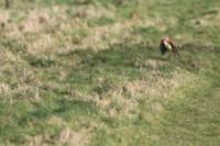 Британскому фотографу удалось снять невероятное проявление дикой природы
