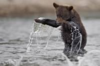На Сахалине медведи раньше срока вышли из спячки