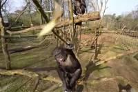 Уже даже обезьяны из зоопарка научились сбивать беспилотники. Правда, не на Донбассе