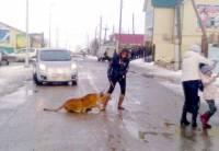 В России дрессировщица решила выгулять на улице циркового льва. Животное напало на ребенка
