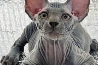 В России за долги арестовали... кота