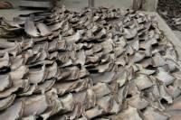 В ходе спецоперации в Эквадоре были найдены 200 тыс. акульих плавников